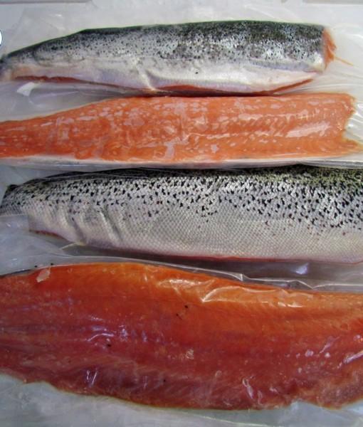 8. Salmon-logo